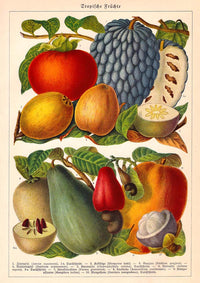 Vintage Fruits chart Decor Illustrations Set of 3 Prints
