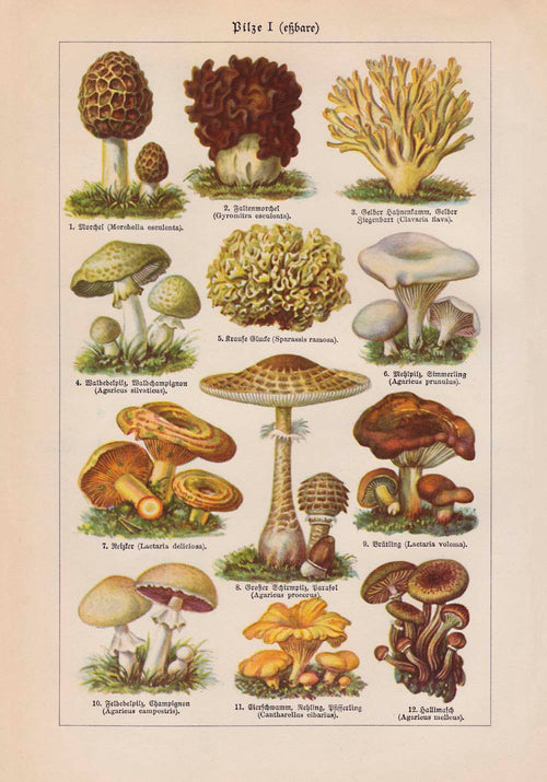 Mushrooms Set of 3 Prints