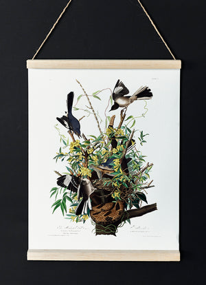 The Mocking Bird of Birds of America - Kuriosis Vintage Prints