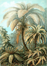Palm Tree Botanical Print by Ernst Haeckel Alsophila - Kuriosis Vintage Prints