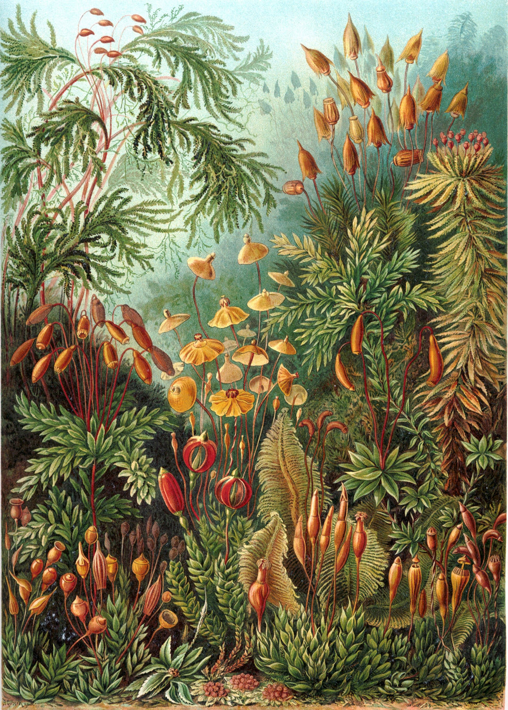 Ernst Haeckel Subaquatic