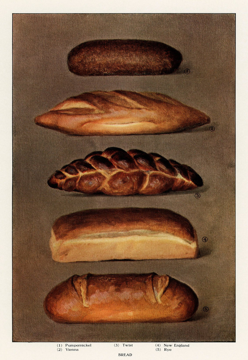 Various types of baked bread loaves from 1911.