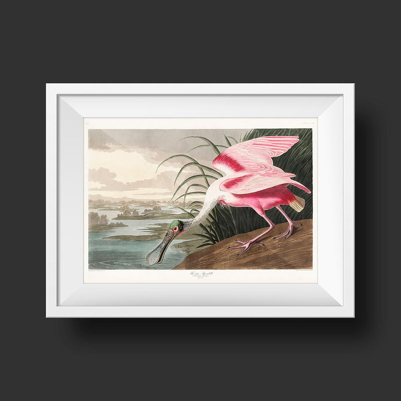 Roseate Spoonbill Vintage Bird Poster from Birds of America