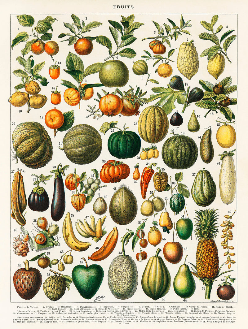 Fruits And Legumes Antique Chart by Adolphe Millot - Kuriosis Vintage Prints