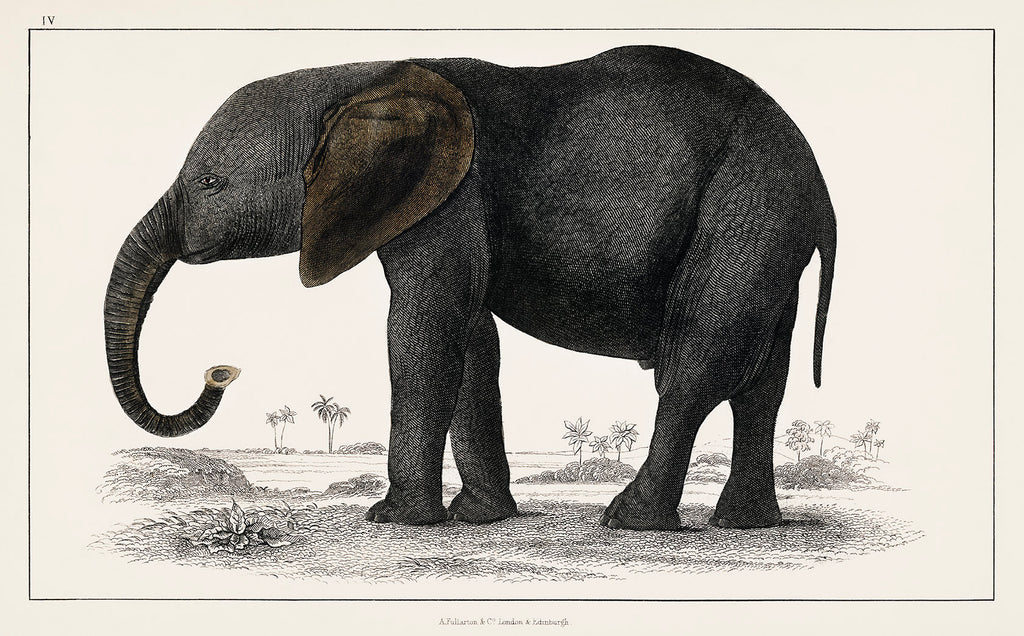 the BIG Elephant