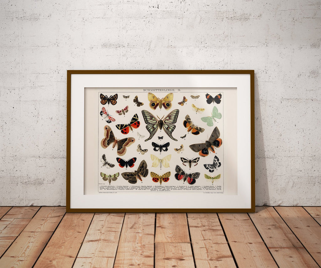 Schmetterlinge II Antique Butterfly and Moth Lithograph Reproduction