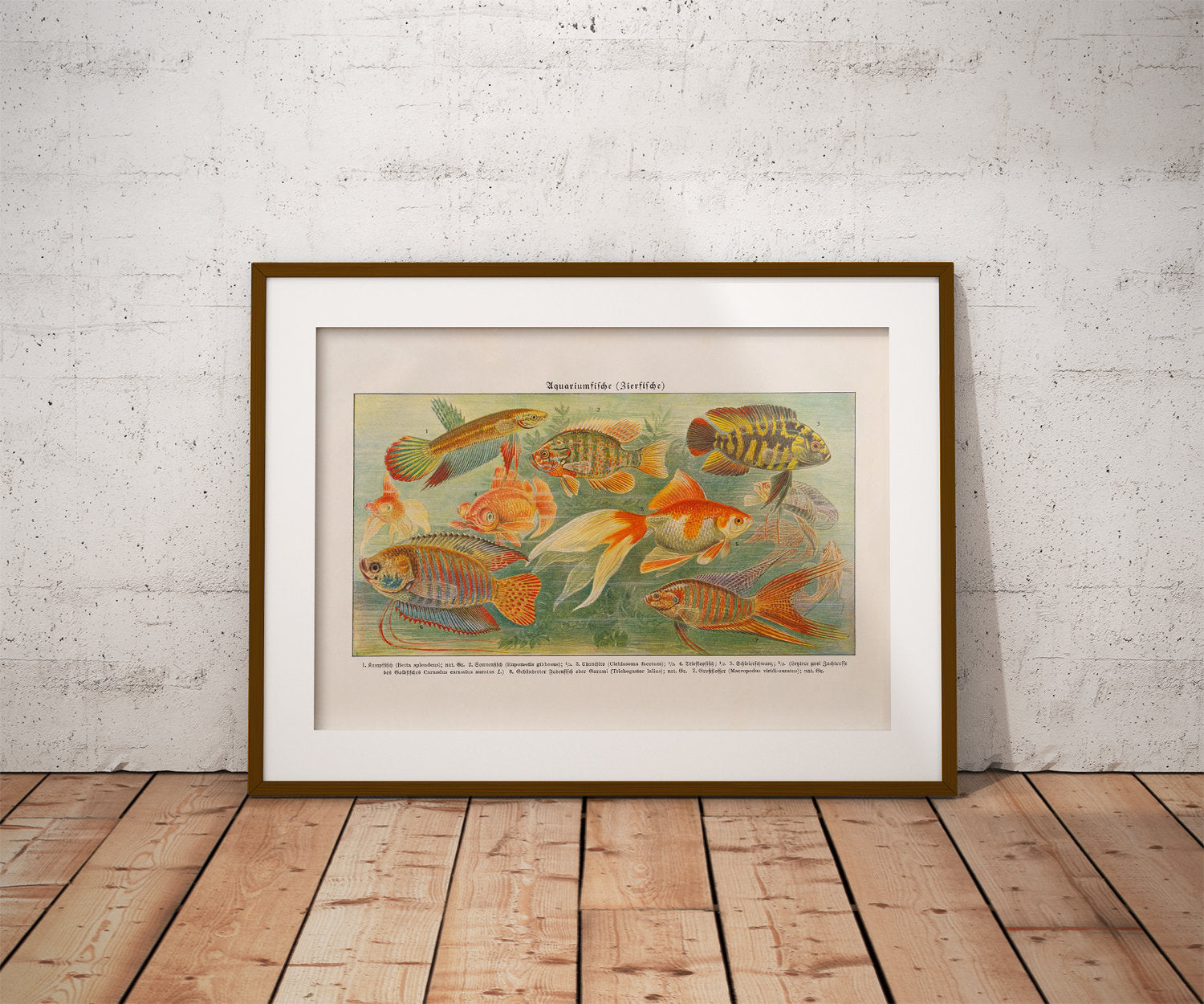 Aquarium Fish II - Kuriosis Vintage Prints