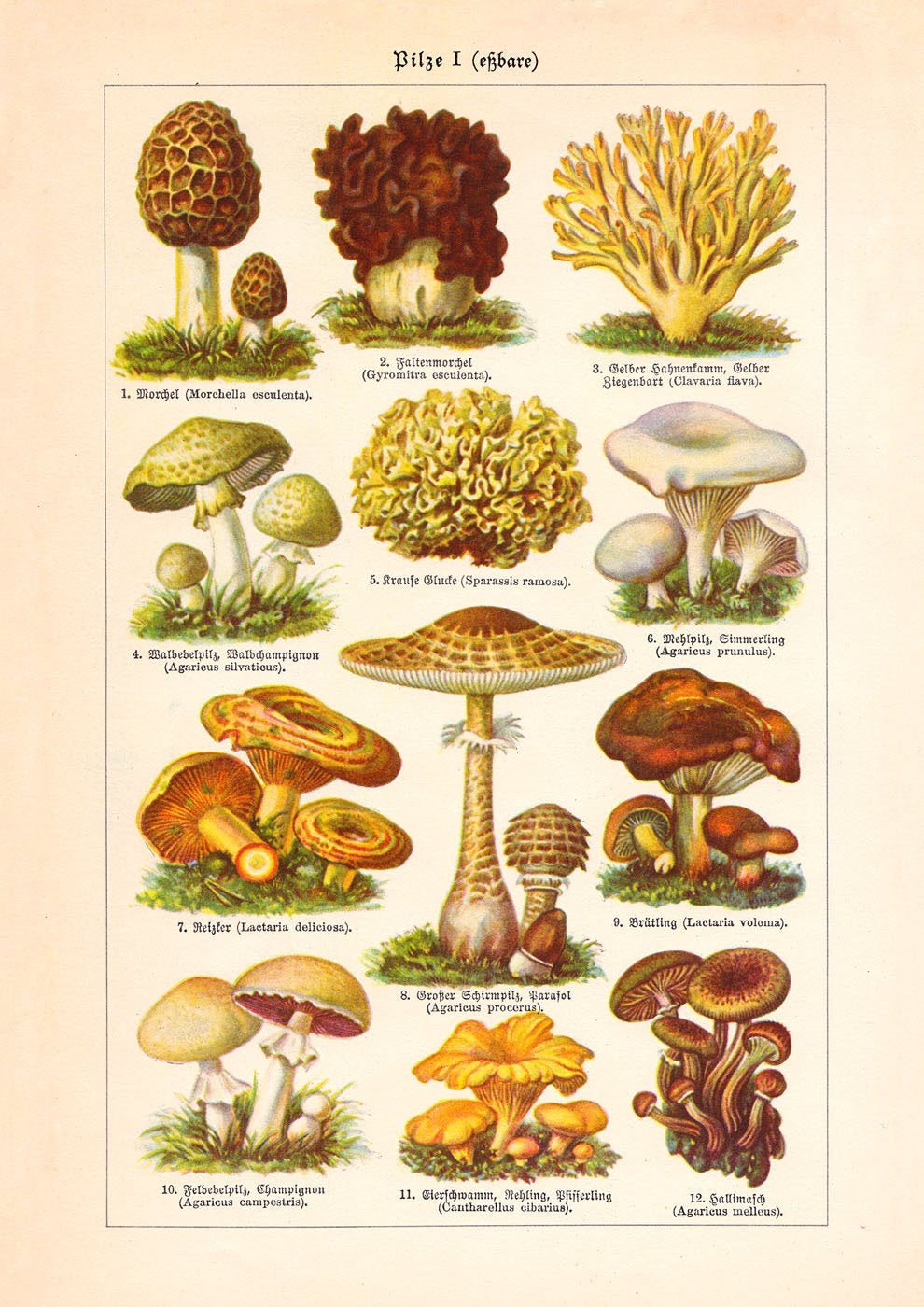 Mushrooms I (Pilze I)