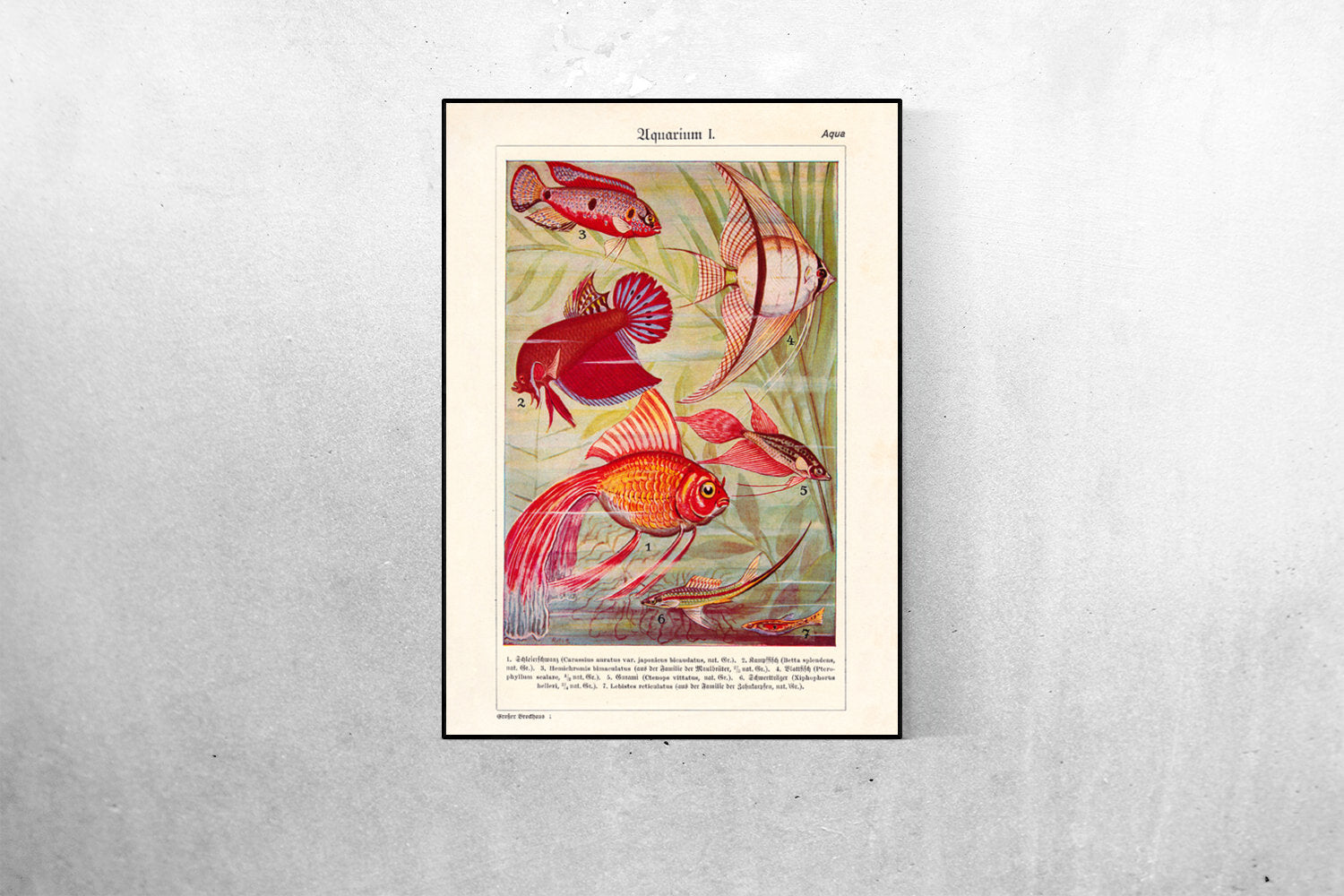 Aquarium Fish - Kuriosis Vintage Prints