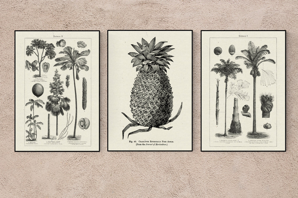 Tropicalia Vibes 3 Print Set on Recycled Art Paper Japanese Archival Inks
