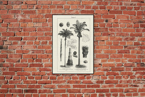 Tropicalia Vibes Poster - Set with 3 beautiful Poster for your decor - Kuriosis Vintage Prints