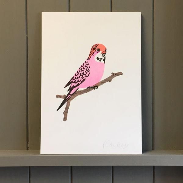 Pink Budgie Print
