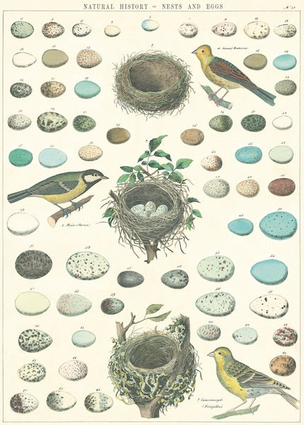 Nests + Eggs Poster