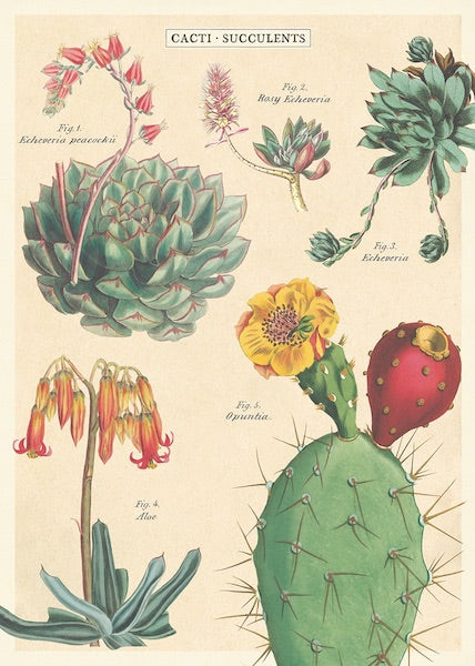 Cacti + Succulents - 2 Poster