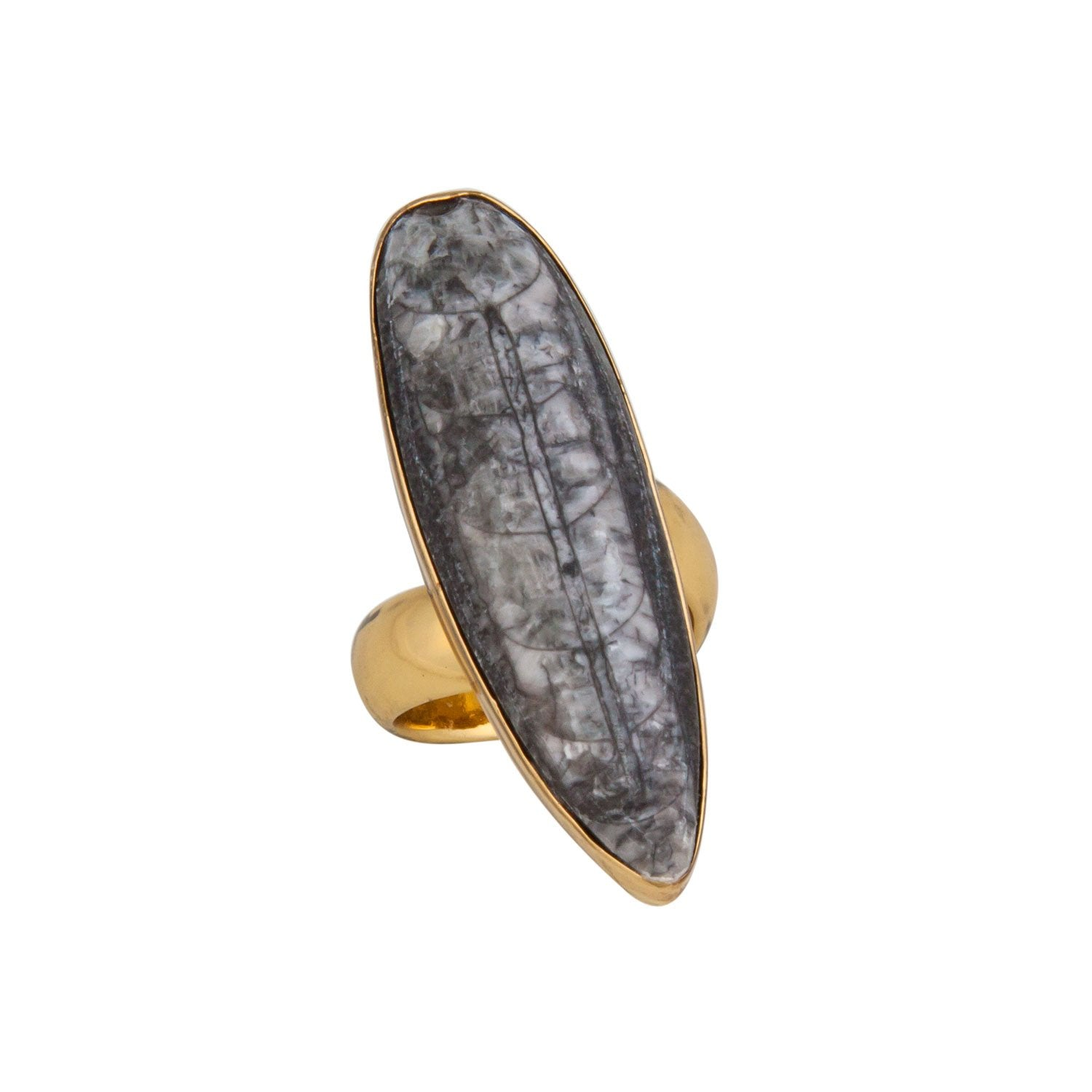 Alchemia Orthoceras Adjustable Ring | Charles Albert Jewelry