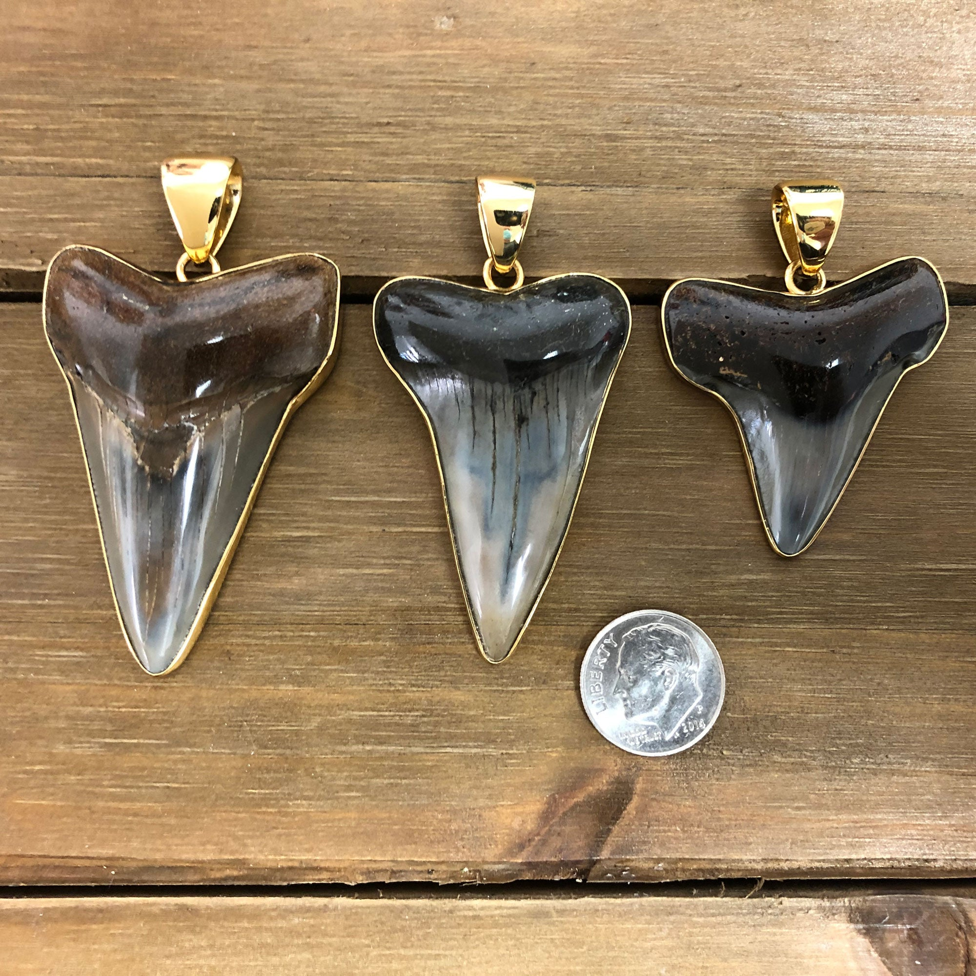 Alchemia Fossil Shark Tooth Pendant | Charles Albert Jewelry