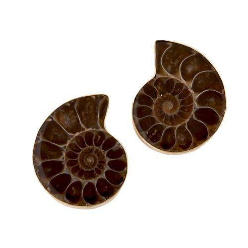alchemia-ammonite-post-earrings - 1 - Charles Albert Inc