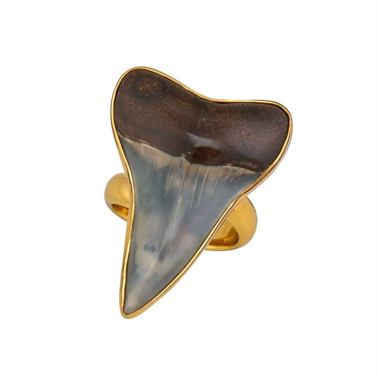 Alchemia Fossil Shark Tooth Adjustable Ring