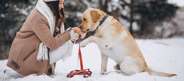 How to spend the winter in peace with a dog?