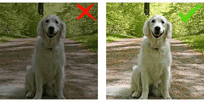 Barkly - Photo Guide how to photograph your pet
