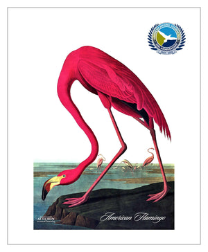 ABA, Pocket/Kitchen/Tea Towel, American Flamingo, AMERICANFLAMINGO, S
