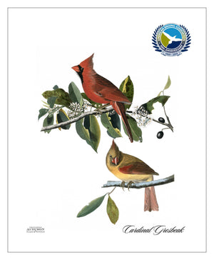 ABA, Pocket/Kitchen/Tea Towel, CG, CARDINALGROSBEAK, S