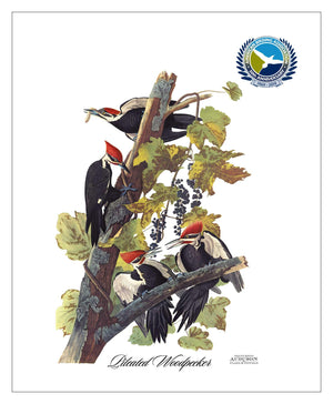 ABA, Pocket/Kitchen/Tea Towel, PW, PILEATEDWOODPECKER, S