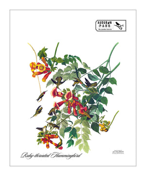 APGD, Pocket/Kitchen/Tea Towel, RH, RUBYTHROATEDHUMMINGBIRD, S