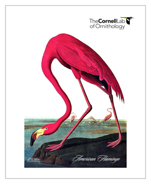 Customer Logo, Pocket/Kitchen/Tea Towel, American Flamingo, AMERICANFLAMINGO, S