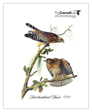 Customer Logo, Pocket/Kitchen/Tea Towel, RS, REDSHOULDEREDHAWK, S