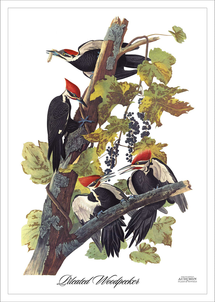 Garden Flag Pileated Woodpecker