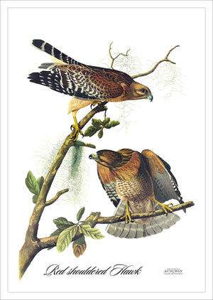 Garden Flag Red shouldered Hawk