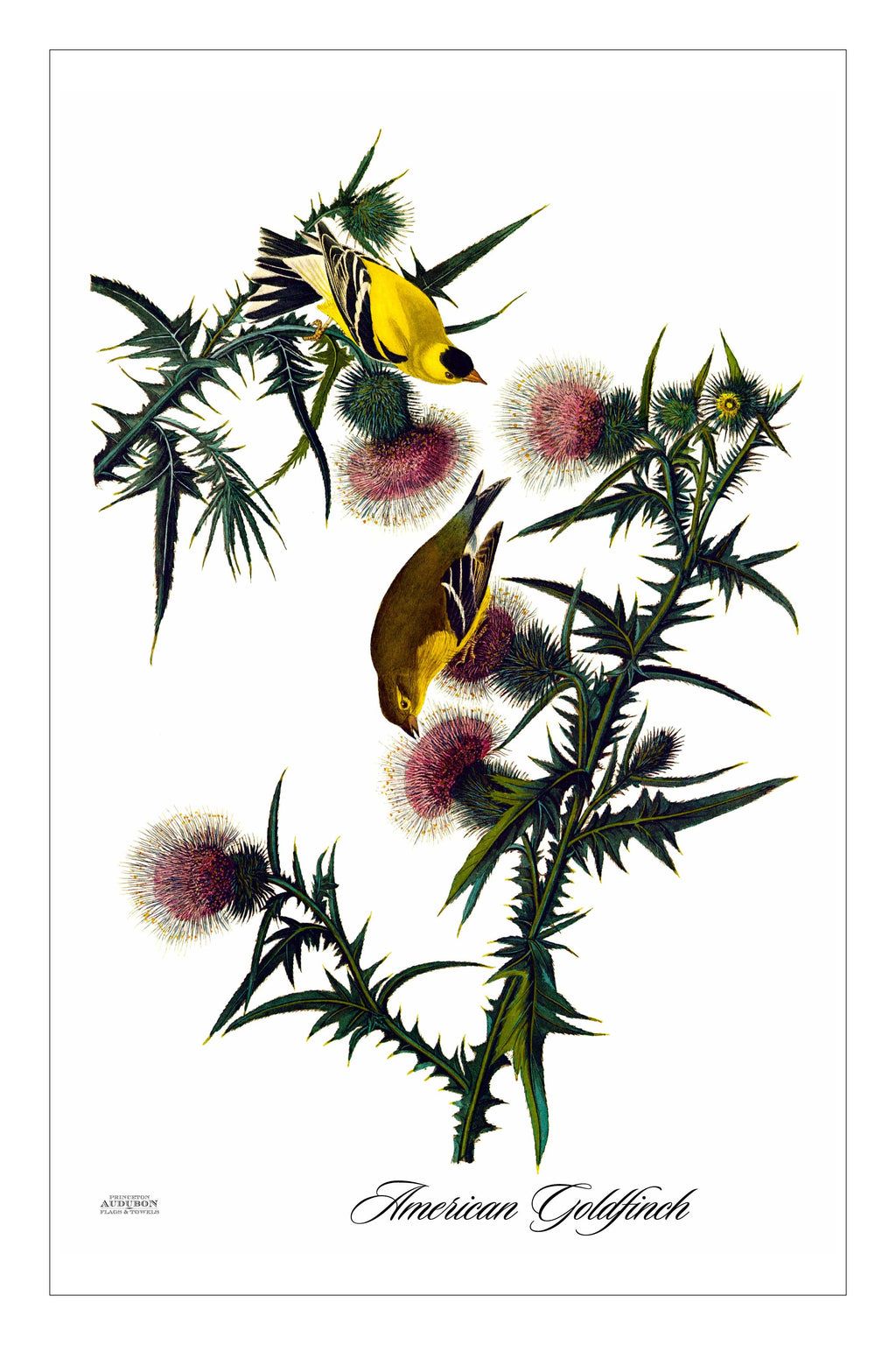 Guest/Kitchen/Tea Towel American Goldfinch