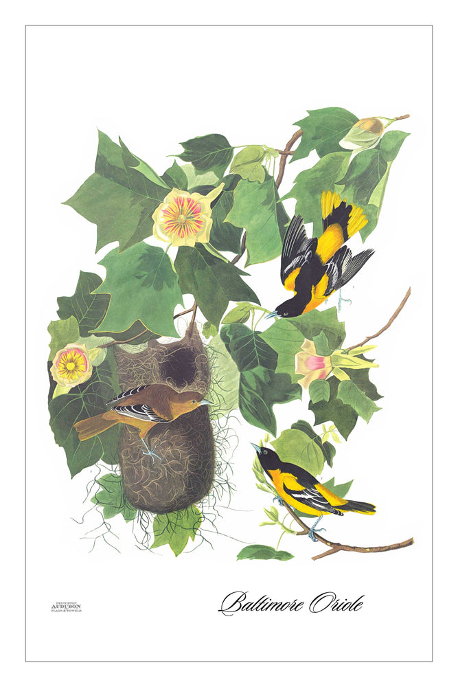 Guest/Kitchen/Tea Towel Baltimore Oriole
