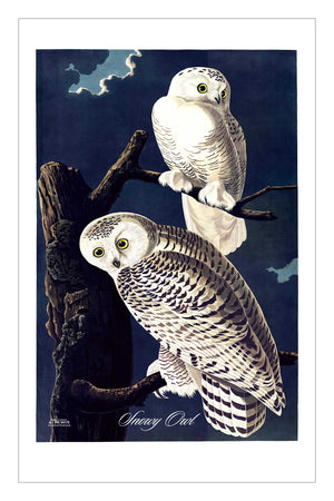 Guest/Kitchen/Tea Towel Snowy Owl