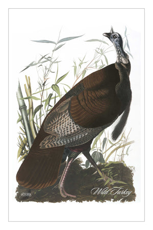 Guest/Kitchen/Tea Towel Wild Turkey