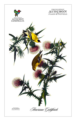 Kitchen Towel no Grommet American Goldfinch
