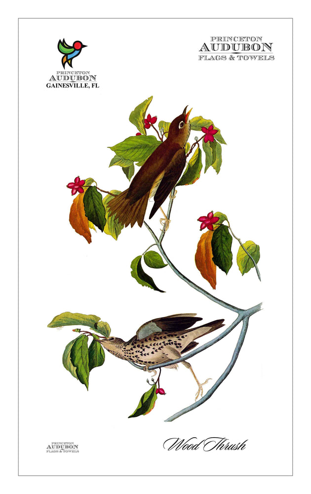 Kitchen Towel no Grommet Wood Thrush