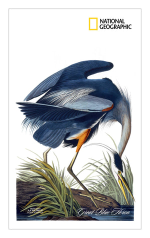 NGS, Kitchen Towel no Grommet 15x25 (KDT), Great Blue Heron, GREATBLUEHERON, S