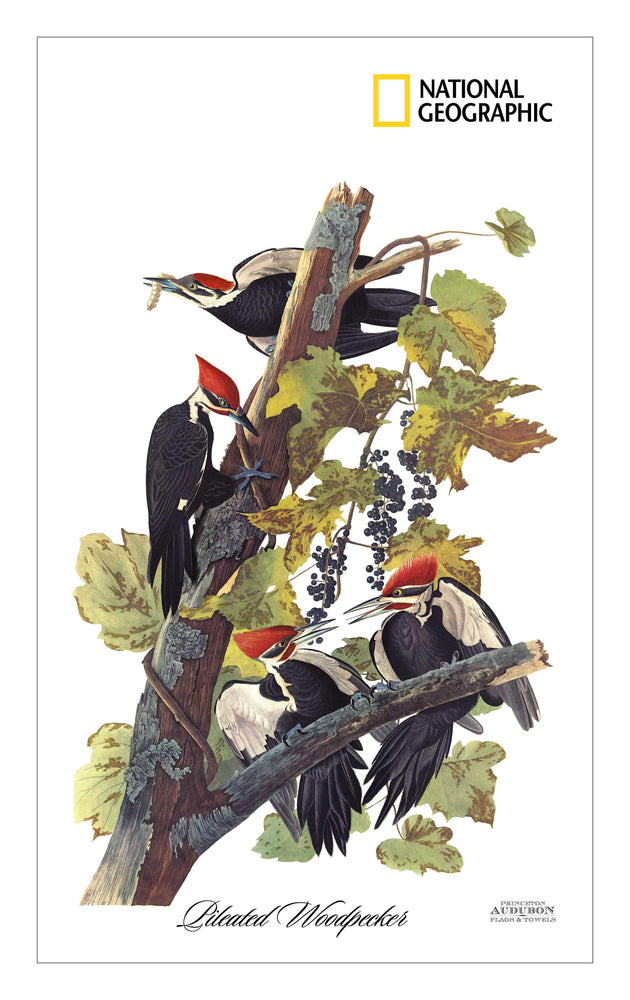 NGS, Kitchen Towel no Grommet 15x25 (KDT), PW, PILEATEDWOODPECKER, S