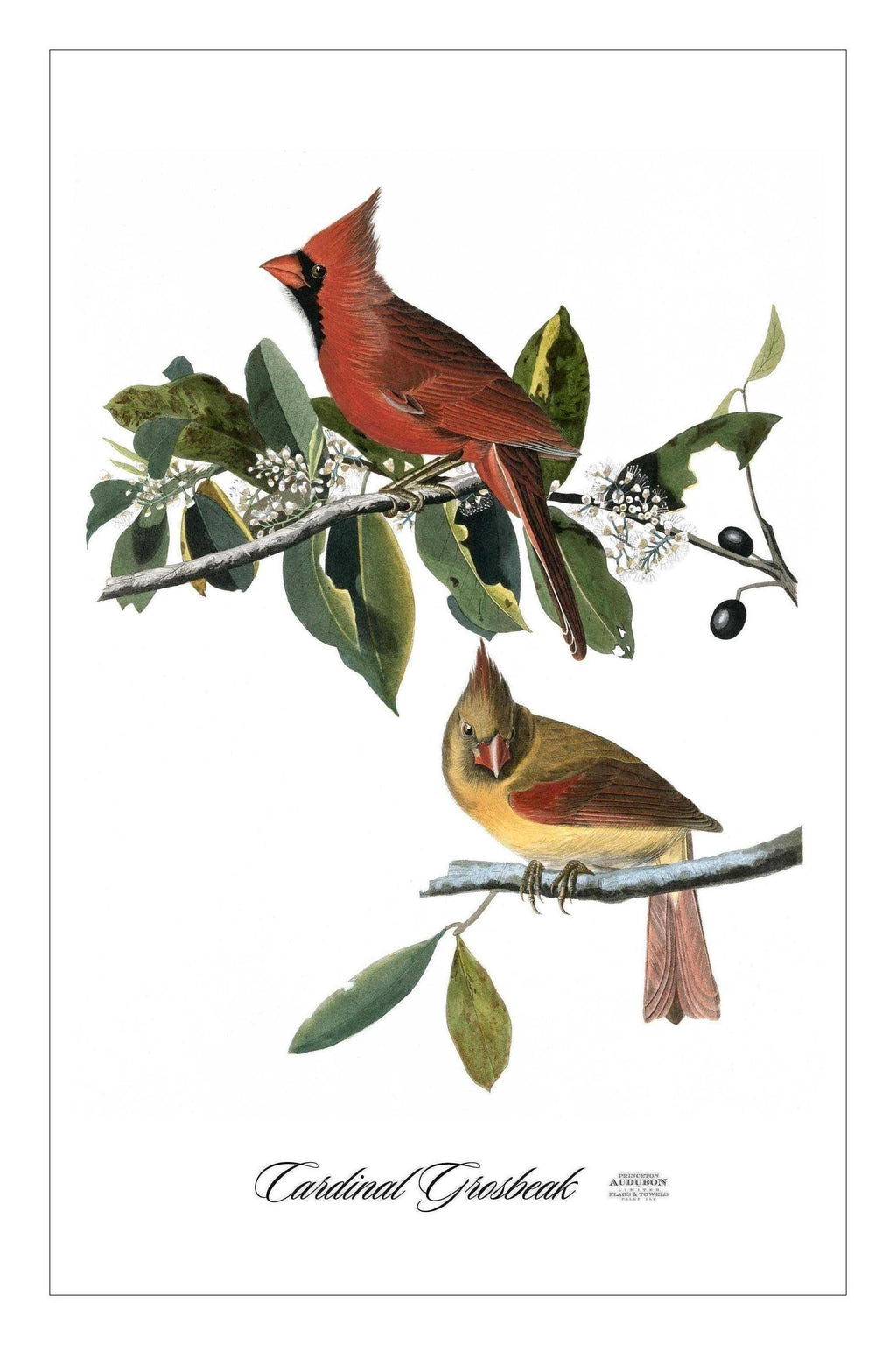 ONE, Guest/Kitchen/Tea Towel, CG, CARDINALGROSBEAK