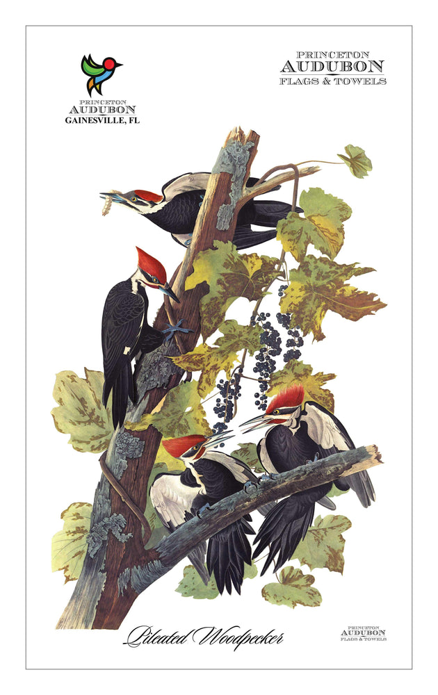 PAL, Kitchen Towel no Grommet 15x25 (KDT), PW, PILEATEDWOODPECKER, S