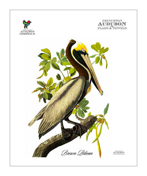 PAL, Pocket/Kitchen/Tea Towel, BP, BROWNPELICAN, S