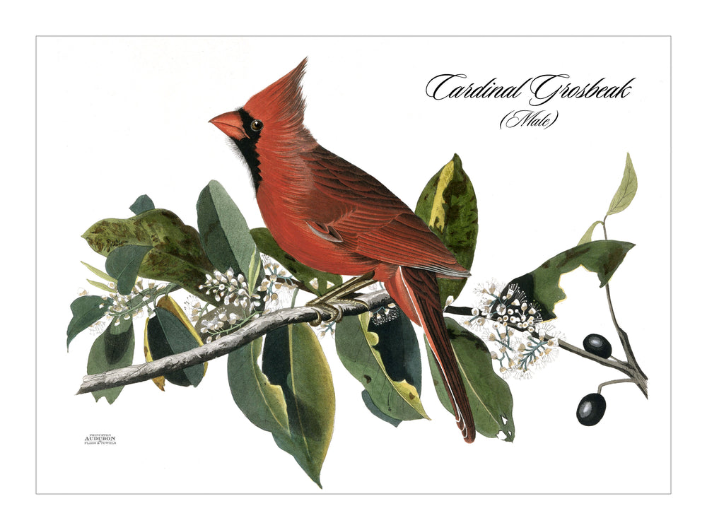 Cardinal Grosbeak Placemat, Woven