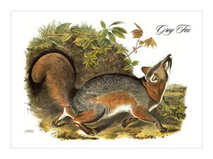 Grey Fox Placemat, Woven