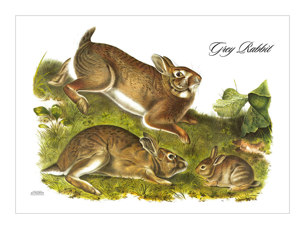 Grey Rabbit Placemat, Woven
