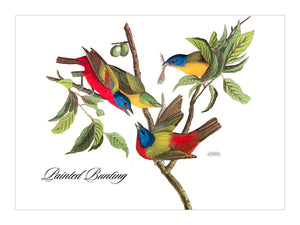 Painted Bunting Placemat, Hardboard