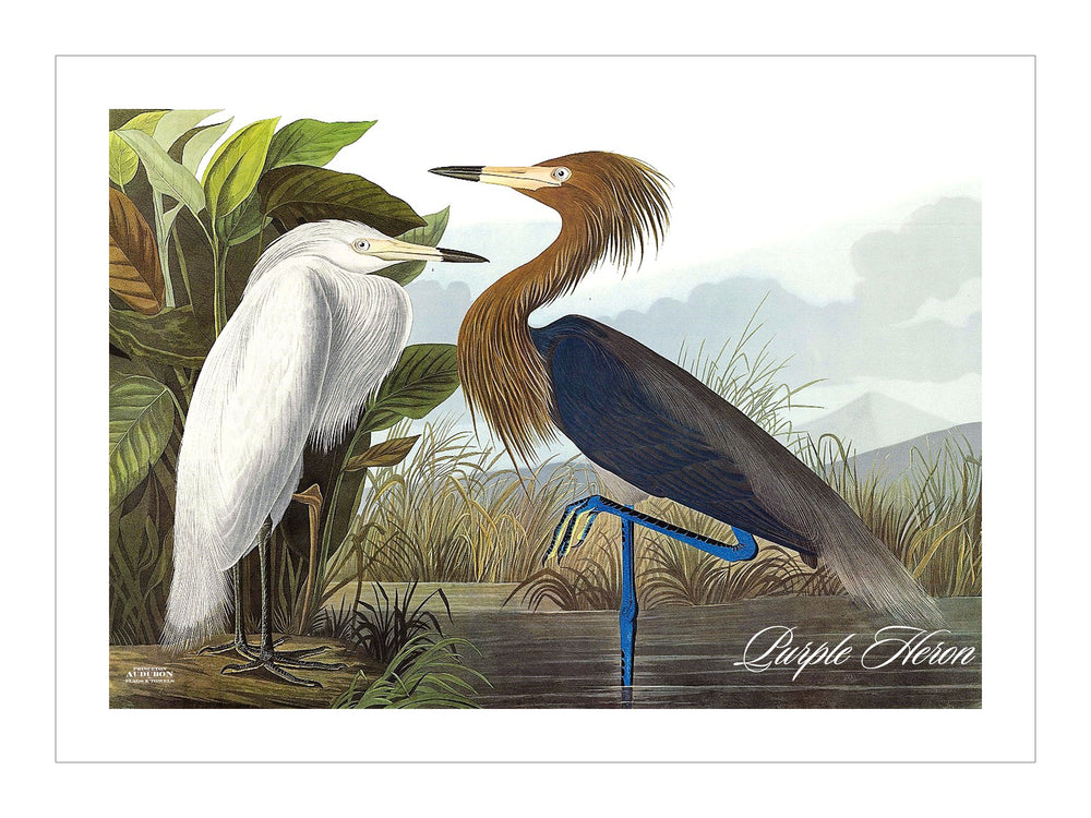 Purple Heron Placemat, Hardboard