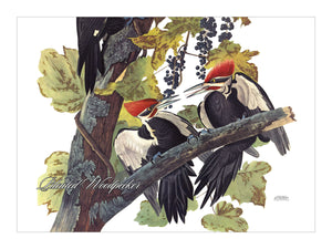 Pileated Woodpecker Placemat, Woven