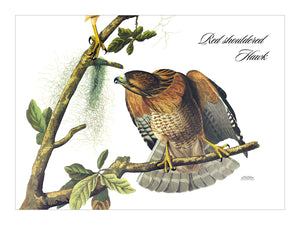 Red Shouldered Hawk Placemat, Woven